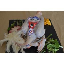 Poulet de Bresse 1.6kg~1.8kg